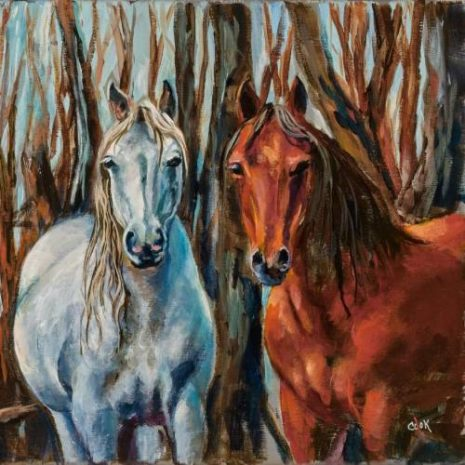 Brumbies Aussie Wild Horses Feature Image 500s70