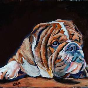 Canadian Bulldog Pup – QQ #42