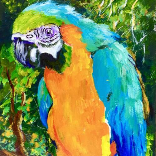 Spyder the Parrot