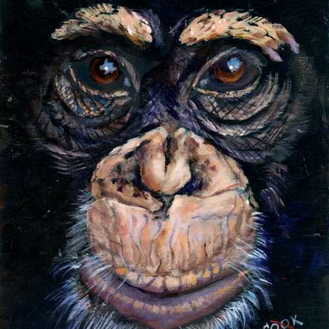 A Chimpanzee Face Featured